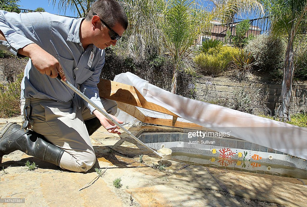 Contra Costa County Mosquito and Vector Control District technician David Wexler inspects a neglected pool for mosquito larvae at a foreclosed home on June 29, 2012 in Pleasant Hill, California. As reports of mosquitoes with West Nile virus are increasing across the country and several people have been confirmed to be infected by the potentially dangerous disease, the Contra Costa County Mosquito and Vector Control District is testing mosquito larvae found in standing water throughout the county and is using mosquito fish and BVA Larvacide oils to eradicate the pest.