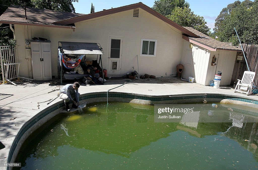 Contra Costa County Mosquito and Vector Control District technician David Wexler releases Gambusia affinis, more commonly known as mosquito fish, into a neglected pool infested with mosquitos at a foreclosed home on June 29, 2012 in Pleasant Hill, California. As reports of mosquitoes with West Nile virus are increasing across the country and several people have been confirmed to be infected by the potentially dangerous disease, the Contra Costa County Mosquito and Vector Control District is testing mosquito larvae found in standing water throughout the county and is using mosquito fish and BVA Larvacide oils to eradicate the pest.