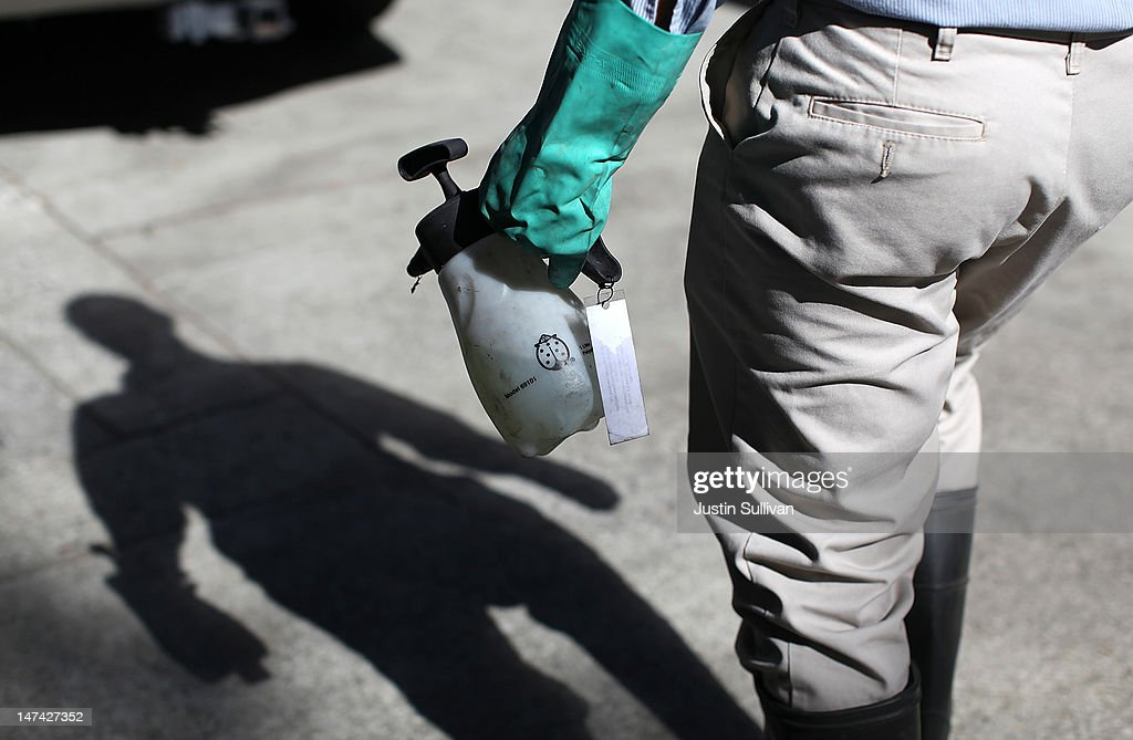 Contra Costa County Mosquito and Vector Control District technician David Wexler carries a container of BVA Larvacide Oil before spraying a catch basin with standing water and mosquito larvae on June 29, 2012 in Pleasant Hill, California. As reports of mosquitoes with West Nile virus are increasing across the country and several people have been confirmed to be infected by the potentially dangerous disease, the Contra Costa County Mosquito and Vector Control District is testing mosquito larvae found in standing water throughout the county and is using mosquito fish and BVA Larvacide oils to eradicate the pest.