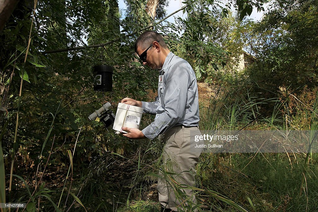 Contra Costa County Mosquito and Vector Control District technician David Wexler inspects a carbon dioxide trap for mosquitos on June 29, 2012 in Pleasant Hill, California. As reports of mosquitoes with West Nile virus are increasing across the country and several people have been confirmed to be infected by the potentially dangerous disease, the Contra Costa County Mosquito and Vector Control District is testing mosquito larvae found in standing water throughout the county and is using mosquito fish and BVA Larvacide oils to eradicate the pest.