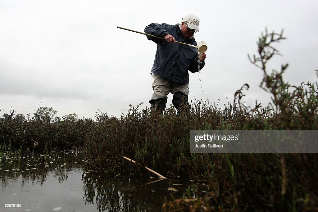 Contra Costa County Mosquito and Vector Control District technician Joe Hummel looks for mosquito larvae in a marsh April 9, 2009 in Concord, California. Unseasonably warm weather for Northern California in January appears to have brought female mosquitos out of hibernation and have started to breed months ahead of the normal breeding season. Several groups of mosquitos found in a marsh near the Contra Costa County town of Martinez have tested positive for the West Nile Virus prompting county officials to do more testing and releasing mosquito fish in abandoned pools around the county.