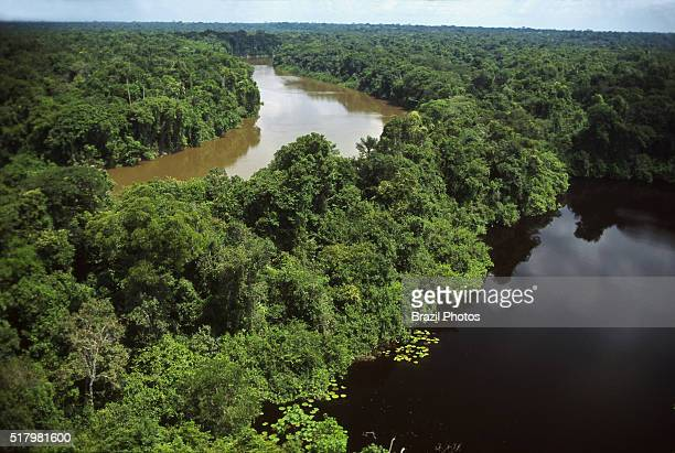 Contrast between the muddy brown water of Urucu river and the dark clean water of a lake Amazon rainforest Brazil aerial view of dense forest with...