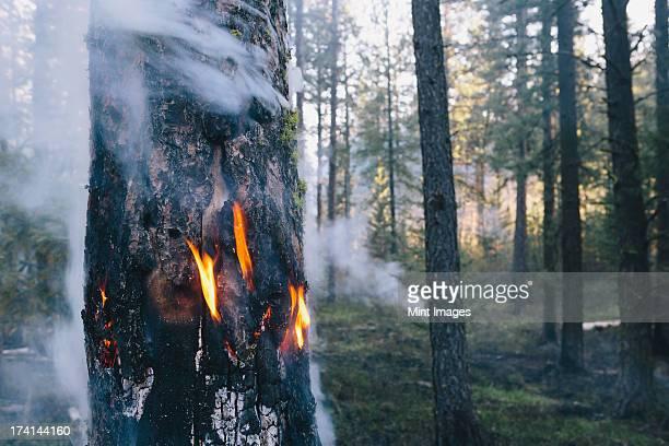 Une forêt contrôlé brûler, réfléchissez ensemble à feu