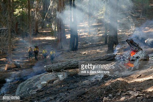 Forest Grove Backyard Burning : Mariposa Grove Stock Photos and Pictures  Getty Images