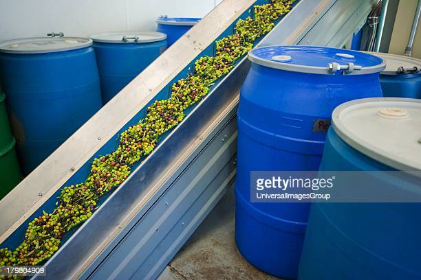 Conveyor belt to washing unit olive mill Figueroa Farms Santa Ynez Valley near Santa Barbara California