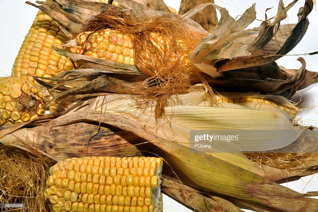 Cooking delicious corn : Stock Photo