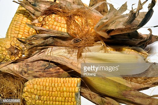 Cooking delicious corn : Bildbanksbilder
