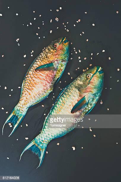 Cozinhar Peixe