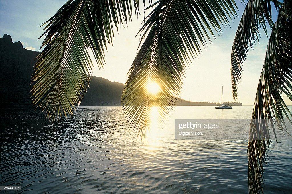 Cooks Bay, Moorea, French Polynesia : Stock Photo