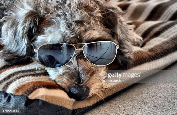 Cool Dude Dog