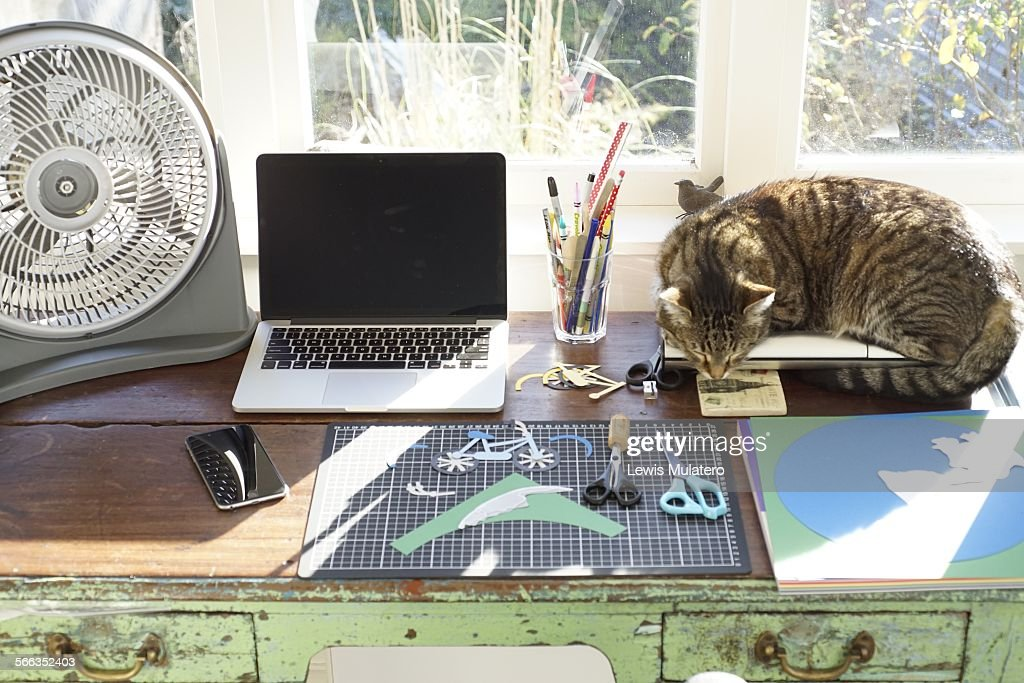 Cooling Off With Fan : Cooling off in home office wooden desk at with table