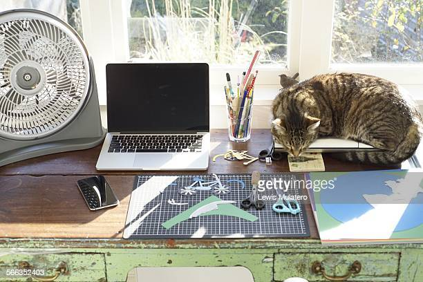 Cooling off in home office Wooden desk at home with table fan laptop computer mobile phone sleeping cat card cutting mat scissors and pens and...
