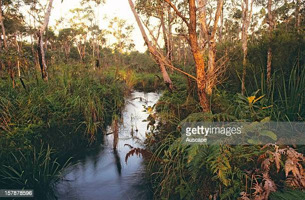 Coonangur Creek one of the creeks draining the west of Fraser Island into Great Sandy Strait and draining part of an extensive swamp area of low...