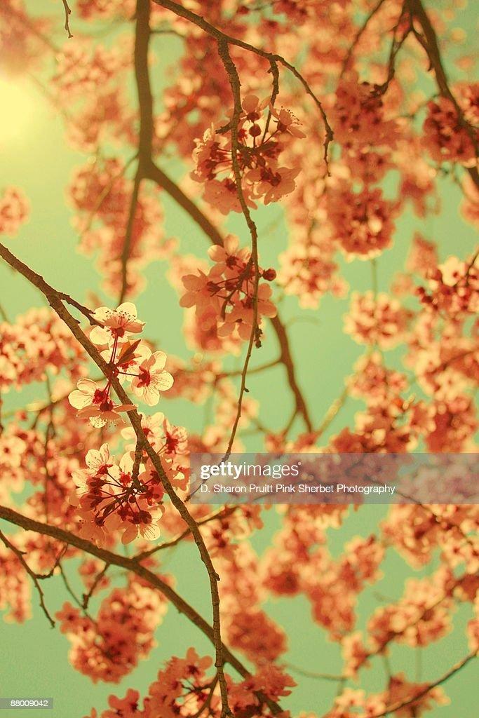 Coorful vintage pink spring blossoms