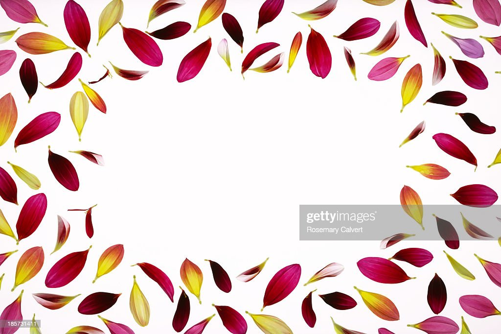 Copy space bordered by colourful dahlia petals