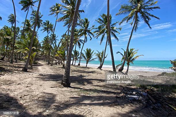 Coqueiral da Praia da Sereia - Maceió, Alagoas