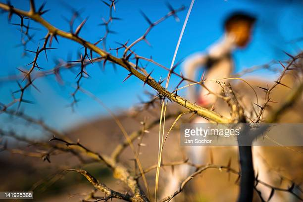 Cora Indian boy with body painted all over runs through a spiny bush before the sacred ritual ceremony of Semana Santa in Jesús María Nayarit Mexico...