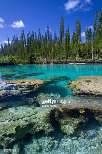 Coral and crystal water