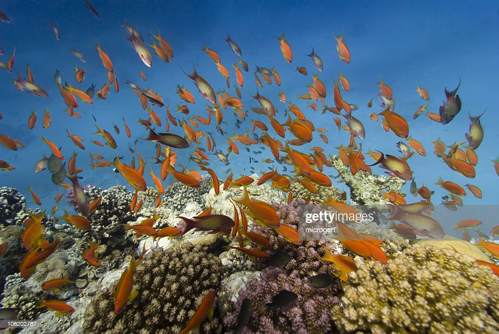 Coral fish reefscape : Stock Photo