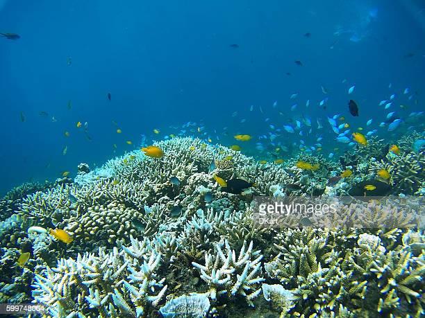 Giardino di coralli