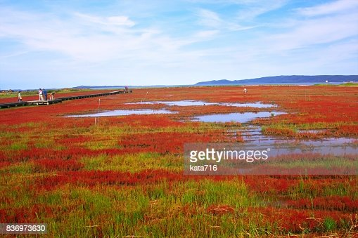 Coral grass : Stock Photo