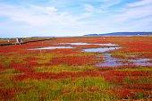 Coral grass