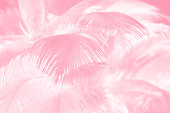 Coral Pink vintage color trends feather texture background,Interior soft luxury heaven angels,Modern image used for design living room,office and others