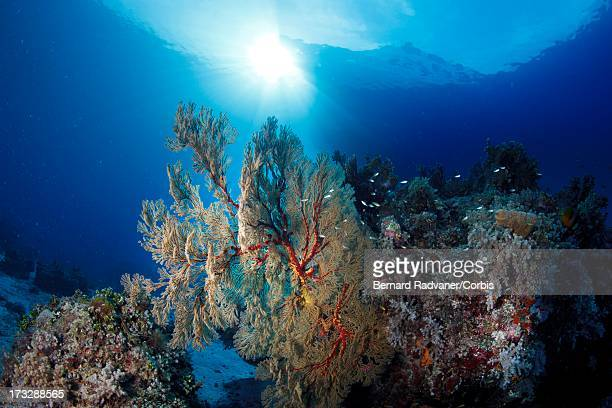 coral reef and boat at the surface