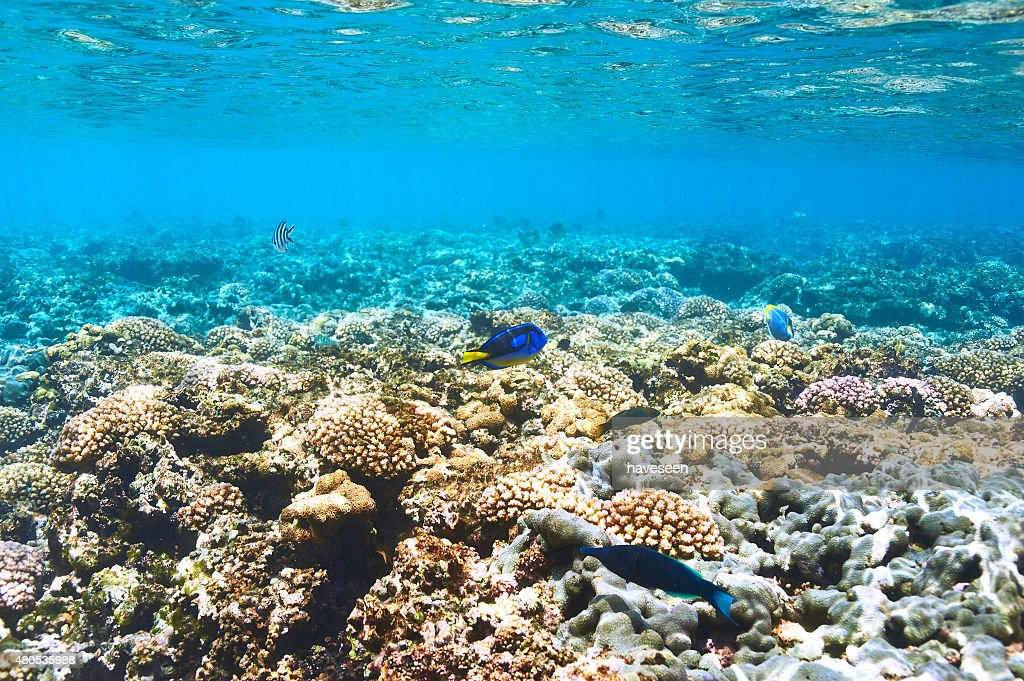 Coral reef and fish : Stockfoto