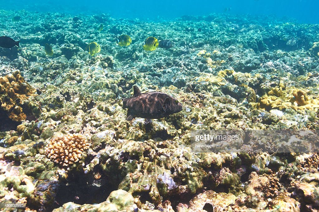 Coral reef and fish : Stock Photo