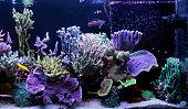 SPS Dominated coral reef aquarium tank