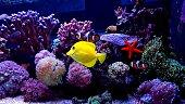 One moment in saltwater aquarium tank