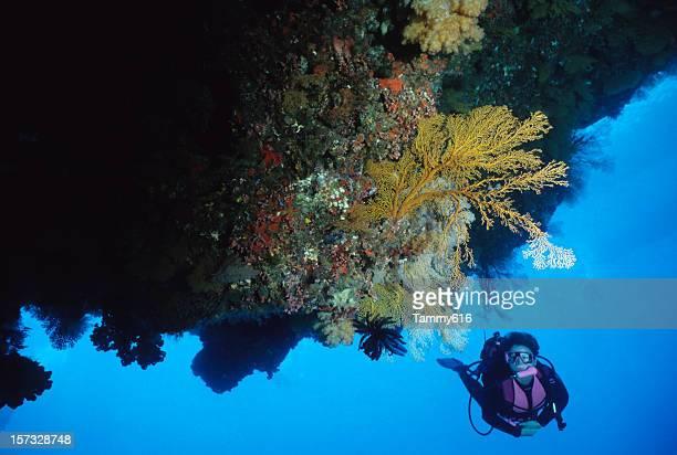 Coral reef Fantasy