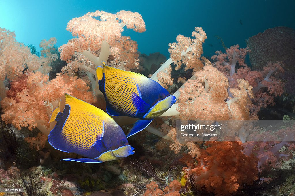 Coral reef fish. : Stock Photo