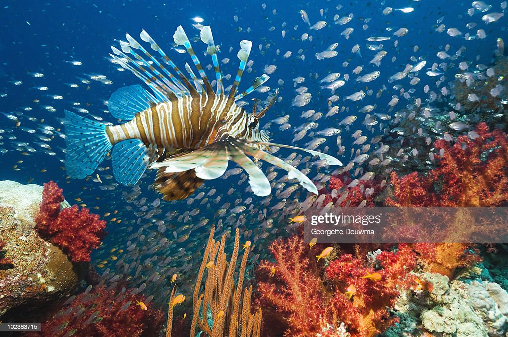 coral reef fish : Stock Photo
