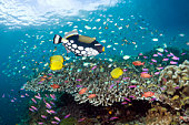 Coral reef fish.