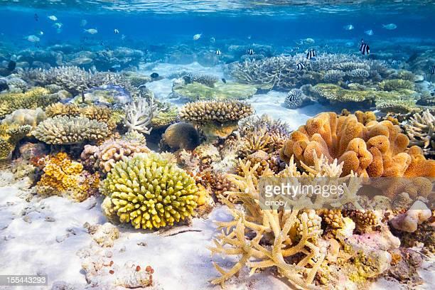 Coral Reef giardino
