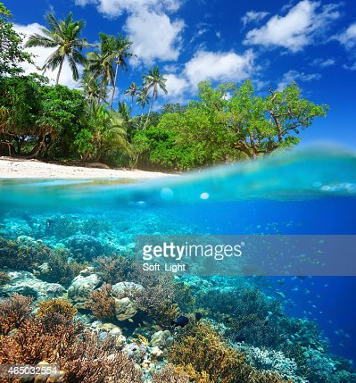 Coral reef in tropical sea. : Stock Photo