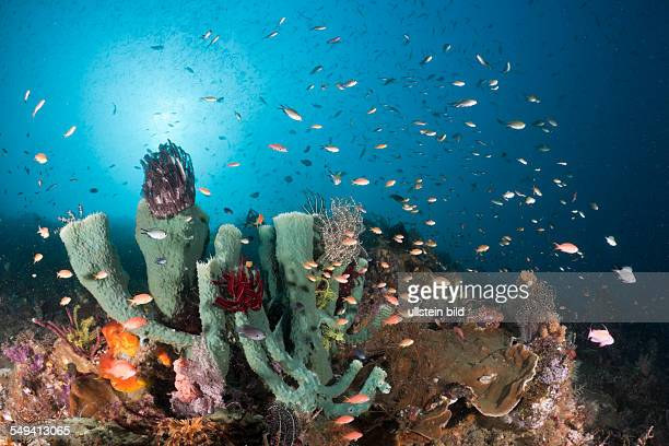 Coral Reef Raja Ampat West Papua Indonesia