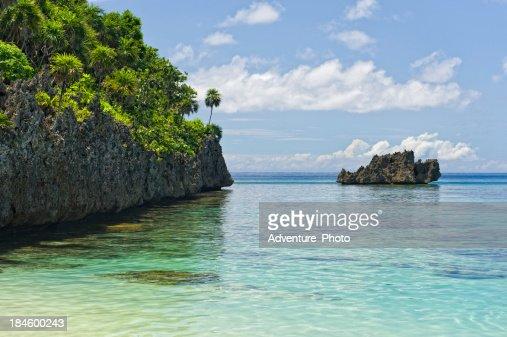 Coral Reef Roatan Honduras