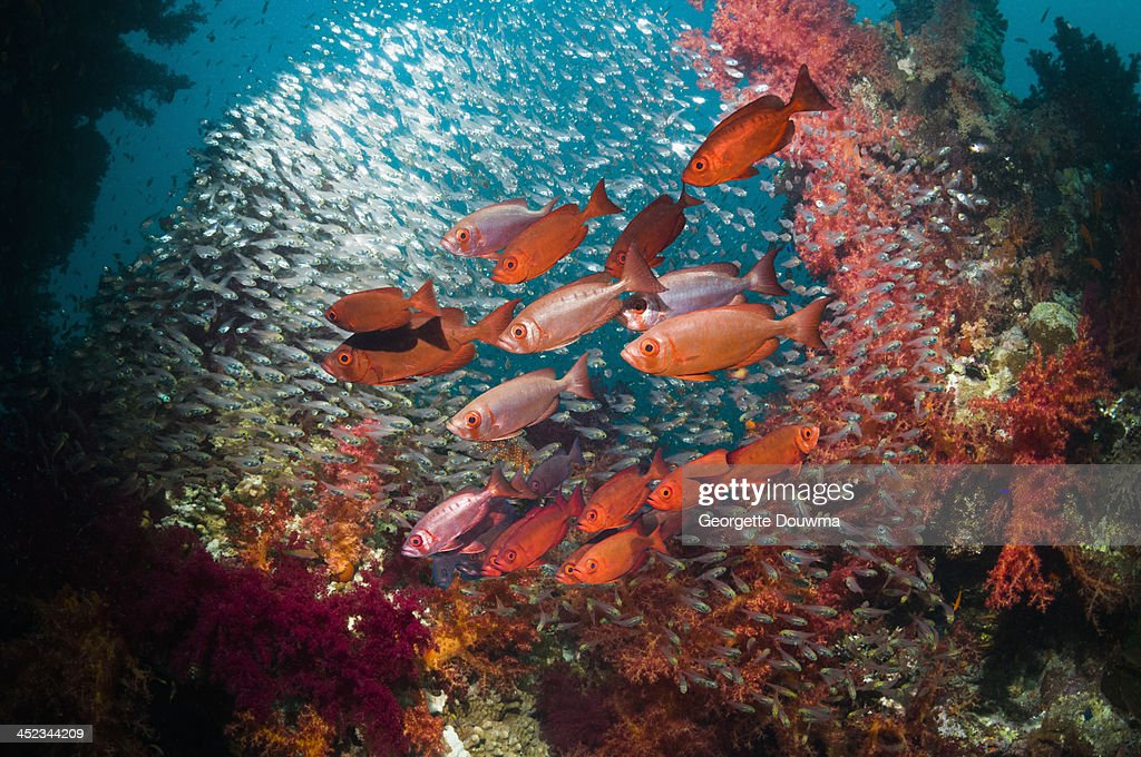 Coral reef scenery : Stock Photo