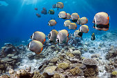 Coral reef scenery