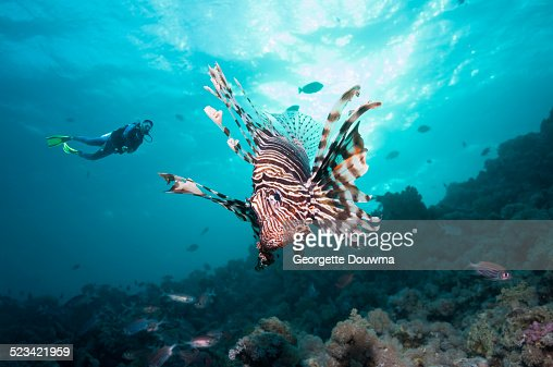 Coral reef scenery with a lionfish and a diver