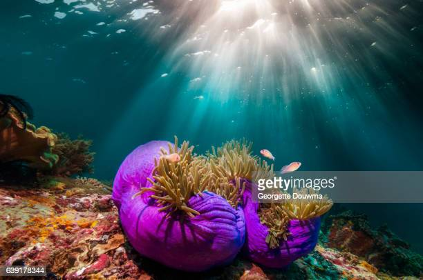 Coral reef scenery with shafts of sunshine through the surfac