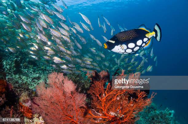 Coral reef scenery with tropical fish