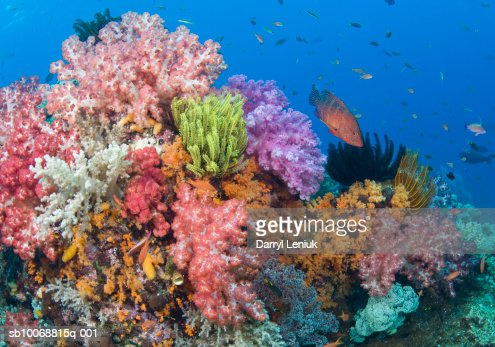 Coral reef, uderwater view : Stock Photo