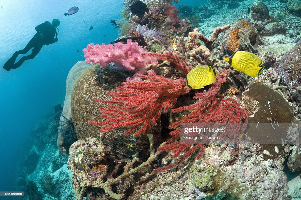 Coral reef with diver and fish