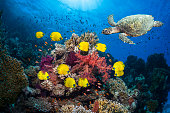 Coral reef with fish and turtle