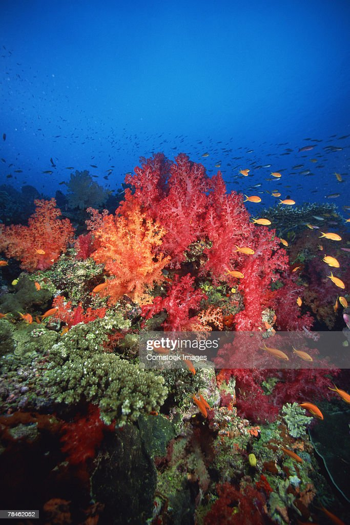 Coral reef with fish : Stock Photo