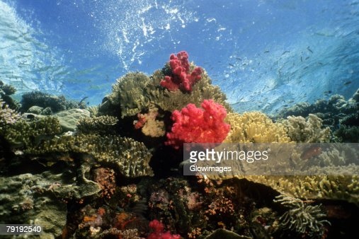Coral reef with soft and hard corals underwater, Palau : Foto de stock